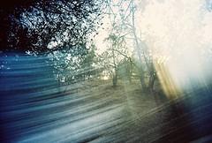 White Slim Angel (Vivitar Wide & Slim) Toy Camera (Meagan Rochelle Ranes) Tags: camera trees white color film nature angel analog toy slim grain wide lofi dream lightleak ethereal expired vivitar c41 vivitarwideslim