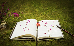 Unspoken words, unwritten ideas (A-STAR-IX) Tags: life pink flowers light red black color green glass grass lines rose sepia pen ink garden paper book petals still purple note thoughts shade vase conceptual ideas whimsical