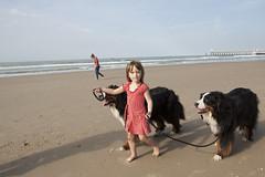 Twee honden op wandel met Ella (goya) Tags: strand noordzee ella zee