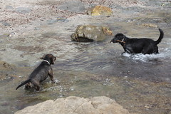 beach (pictumad) Tags: dog beach water mar agua playa perros