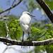 Uccelli verso la Pintada (4)