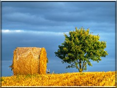 autumn magic -  harvest dream (Ostseeleuchte) Tags: autumn sky tree field herbst harvest feld himmel baum ernte