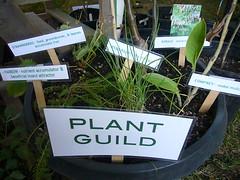 Plant Guild (Heath & the B.L.T. boys) Tags: seattle sign garden planter permaculture