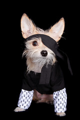 Talk Like a Pirate Day (Stacey Warnke Photography) Tags: dog canine pirate pooch kenzie mckenzie talklikeapirate