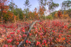 Happy Autumn (Gar40y On A Break) Tags: autumn trees nature leaves canon autumncolors foliage hdr autumnscene topaz photomatix cs6 northdakotanature jclarksalyernationalwildliferefuge mygearandme mygearandmepremium mygearandmebronze mygearandmesilver mygearandmegold garyandersonphotography minotphotographer