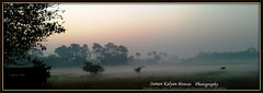 light of dawn (Suman Kalyan Biswas) Tags: morning winter nature sunrise