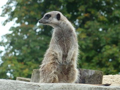 """Longleat Safari Park • <a style=""""font-size:0.8em;"""" href=""""http://www.flickr.com/photos/81195048@N05/8017524242/"""" target=""""_blank"""">View on Flickr</a>"""