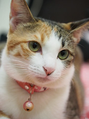 20120709-P7090119 (Noelas) Tags: pet cat momo kitten g taiwan olympus mo 09 taipei dslr   1425  asph f25 07    omd 2012 m43 14mm em5 microfourthirdssystem panasoniclumixg14mmf25asph olympusomdem5