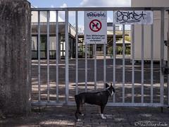 Das Schild ist falsch !! 01.09.2012