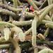 Cactus nel giardino botanico di Medellin