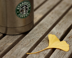 Get Up (avirus) Tags: fall leaf ginkgo starbucks