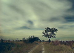 A path without obstacles .../ Un camino sin obstáculos ... (Claudio.Ar) Tags: sky santafe color tree argentina clouds path sony country trail fields topf125 dsc pampa h9 claudioar claudiomufarrege