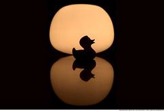 278 - What the duck? (Ata Foto Grup) Tags: park light lake reflection ikea water pool night swimming swim canon dark toy 50mm duck indoor kaz gece ördek sillhoutte göl yansıma havuz ışık oyuncak canon50mm18 yüzme gezme silüet karanlık 5dmarkii 5dmark2 iççekim