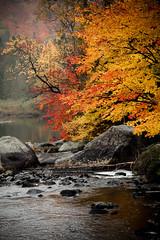 Laurentian Autumn (Cyrielle Beaubois) Tags: autumn trees canada color automne river couleurs rivire arbres qubec septembre feuilles 2012 laurentides leeves canoneos5dmarkii cyriellebeaubois