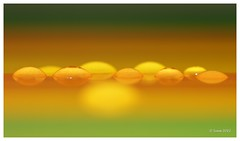 ... organized ... (neurosheep) Tags: abstract droplets druppels blinkagain bestofblinkwinners blinksuperstars
