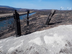 Burned posts, near the Kittitas Valley Wind Farm (old desolate) Tags: tablemountain forestfires easternwashington