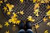 fallen yellow leaves (bluechameleon) Tags: street city autumn urban color colour leaves yellow vancouver self grit shoes boots decay sidewalk dirt fallen manholecover bluechameleon artlibre sharonwish bluechameleonphotography