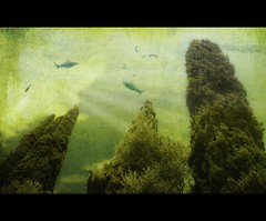 Deep sea? (guiba6) Tags: trees texture photoshop sealife pesci frame elaborazione
