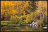 Bishop Creek 7787 (maguire33@verizon.net) Tags: fallcolor gps aspen bishop canon5dmarkiii canongpe2