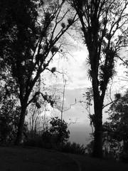 Manizales, Caldas. (DAIRO CORREA) Tags: dairo correa gutirrez dairocorrea colombia amrica latina suramrica suramerica manizales caldas eje cafetero