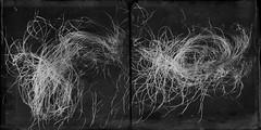 Corn silk-5380 (Poetic Medium) Tags: diptych produce stilllife scratchcam kitcamghostbird blackandwhite organic food mextures moldiv snapseed abstract ipod corn