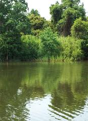 5 River Delta Alabama (42) (Stonehenge 68) Tags: 5riversdelta mobile delta wildlife alligator duck pelican water waterhyacinth hemlock snowyegret alabama
