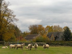 Egleton Rutland Village Church and Sheep 2009 (@oakhamuk) Tags: egleton rutland village church sheep 2009 martinbrookes