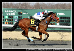 IMG_0643 (femalejockeys) Tags: femalejockeys turfway park female athletes horse racing horses thoroughbred kentucky derby