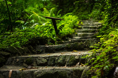 IMG_0519_1 (pavel.milkin) Tags: thailand phangngan tonprai forest jungle leaves tree stairs gogreen green travel canon canon550d 550d helios helioslens helios442 442 old colour endlesssummer bokeh bokehlicious