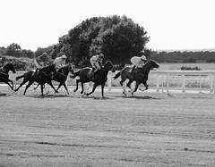 Early leader (smcnally24601) Tags: epsom downs racing horse horses jockey riding surrey england britain summer late betting sport