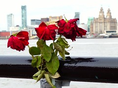In memory (llocin) Tags: sorrow sadness roses liverpool city loss bereavement mournful monument mourning
