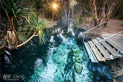 Bitter-Springs (Kiall Frost) Tags: bittersprings thermalpool mataranka northernterritory australia water blue aqua clear sun star green kiallfrost photo