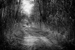*** (pszcz9) Tags: polska poland przyroda nature parknarodowy nationalpark droga road las forest pejza landscape bw blackandwhite monochrome beautifulearth sony a77