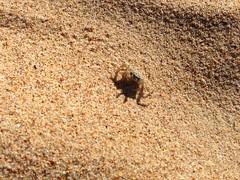 Crab (Dushan and Miae) Tags: crab sand beach