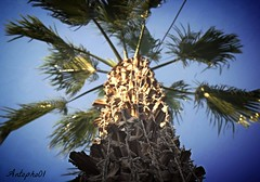 LES VACANCES (Antophoto01) Tags: antophoto arbre solei plage t vacance