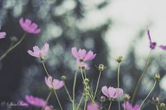 (shin4433) Tags:  japan  nature