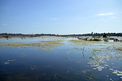 Beautiful water in the forest (Isabel-Valero) Tags: cambodia asia camboya travel water swamp lake nature landscape