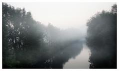 Dawn (na_photographs) Tags: river fluss trees fog mist nebel dunst bume dmmerung morgenstimmung nature