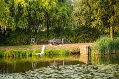 Hasselt - Park (saigneurdeguerre) Tags: europe europa belgique belgi belgien belgium belgica ponte antonioponte aponte ponteantonio saigneurdeguerre canon 5d mark iii 3 eos limburg limbourg hasselt park parc eau water agua aqua