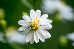 DSC01047.jpg (chagendo) Tags: pflanze makro makrofotografie sonyalpha7ii 90m28g outdoor
