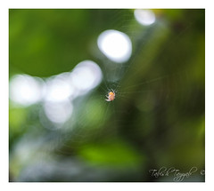 No struggle, No progress! (Tabiish Tayyab) Tags: spider web beautifultinycreature light nature colorsofnature dof sharp frame closeup