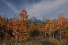 Mt. Moran (f/Kat) Tags: gtnp grandtetonnationalpark wyoming autumn fall aspen reflections