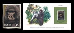 Gorilla: Stamps - Rwanda (1978) (W i l l a r d) Tags: gorilla stamps stamp timbre gorila gorille briefmarken briefmarke timbres