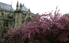 prizs 99 (T.Istvn) Tags: city flowers paris france detail building tree church rose architecture french stadt notre dame parizs prizs francia eglise virg templom virag vros varos franciaorszg epulet franciaorszag plet