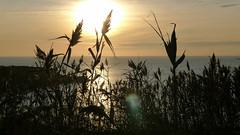 Winter Sun (Reggie-123) Tags: sunset landscape devon exmouth elementsorganizer pansoniclx5