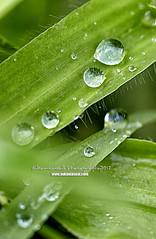 Khandala ([SP] Photography & Art) Tags: cloud rain hill monsoon khandala lonavala hillstation