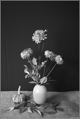 Dahlia. Canon 5D+SMC Pentax-M 1.7/50mm. (Andrey Maltsev) Tags: flowers naturaleza flores flower macro nature fleurs flora blumen fiori encyclia edithiana