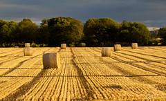 Magic of golden hour (Sagar Simkhada) Tags: sunlight field landscape scotland stack hay 2012 morayshire sagarsimkhada