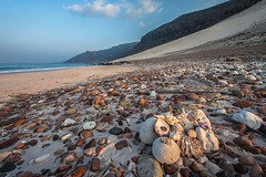 beach full colored stones and shells, dihamri beach, soqotra island, unesco, yemen (anthony pappone photography) Tags: pictures travel shells beach nature digital canon lens landscape island photography photo paradise foto natural image stones picture natura lagoon unesco arab arabia adan yemen arabian laguna fotografia sassi spiaggia paesaggio paradiso reportage photograher arabo yemeni phototravel yaman naturale socotra soqotra arabie arabiafelix اليمن arabianpeninsula يمني 也門 conchilgie سقطرى сокотра alyaman yemenpicture yemenpictures 索科特拉 dihamribeach ソコトラ सोकोट्रा qalansylah