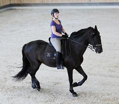 Hippikos (s11_8) Tags: horse pferd lusitano hst hippikos